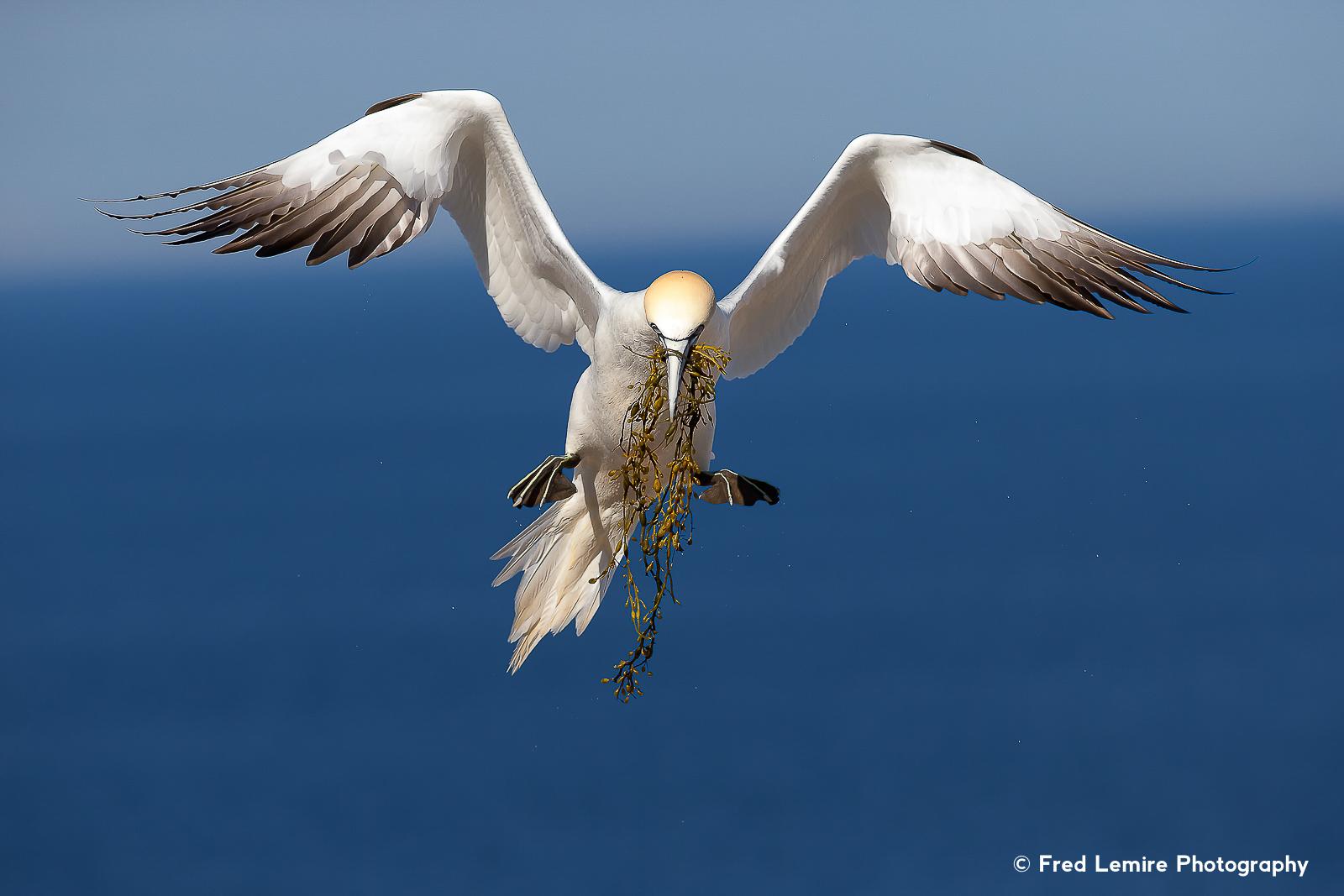 Sea birds 5