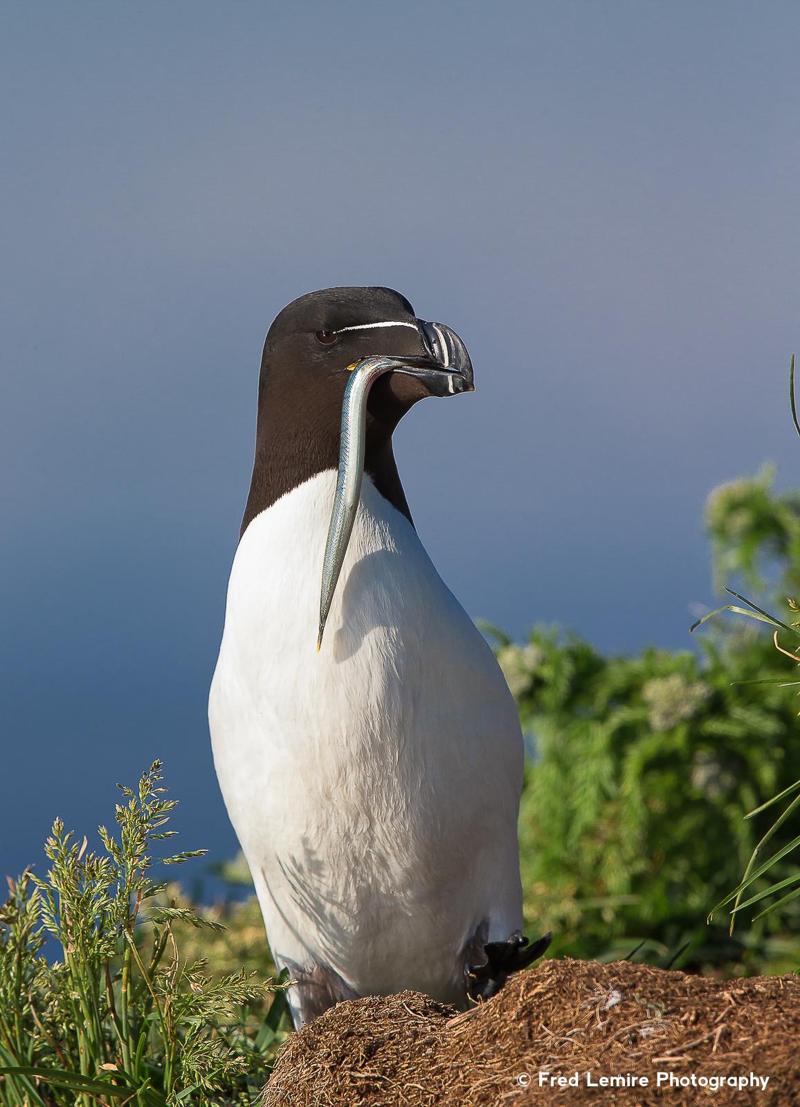 Sea birds 17