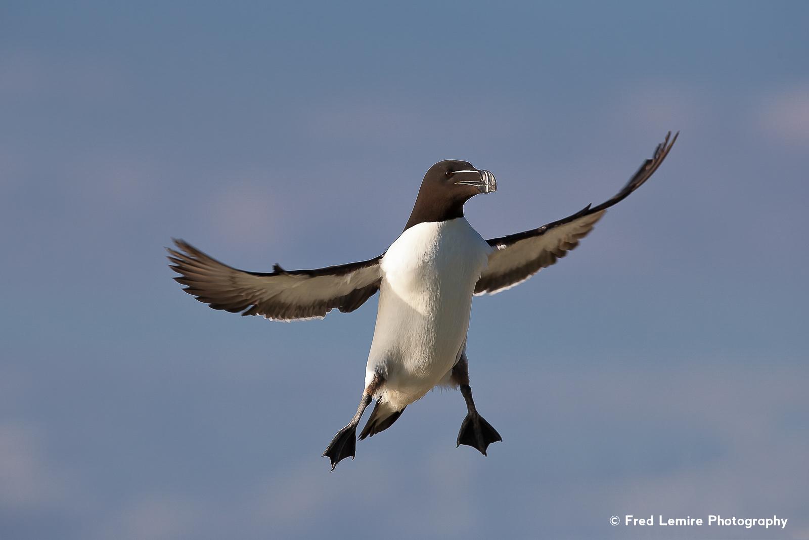 Sea birds 20