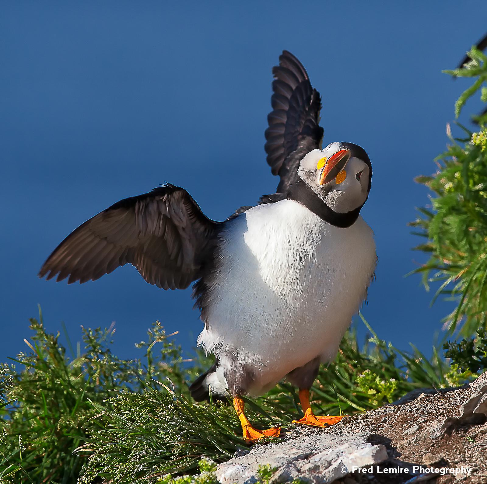 Sea birds 19