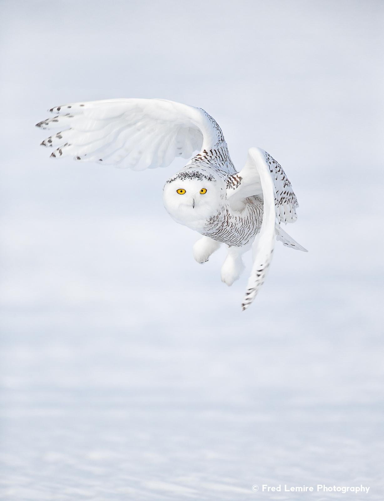 Owls 16