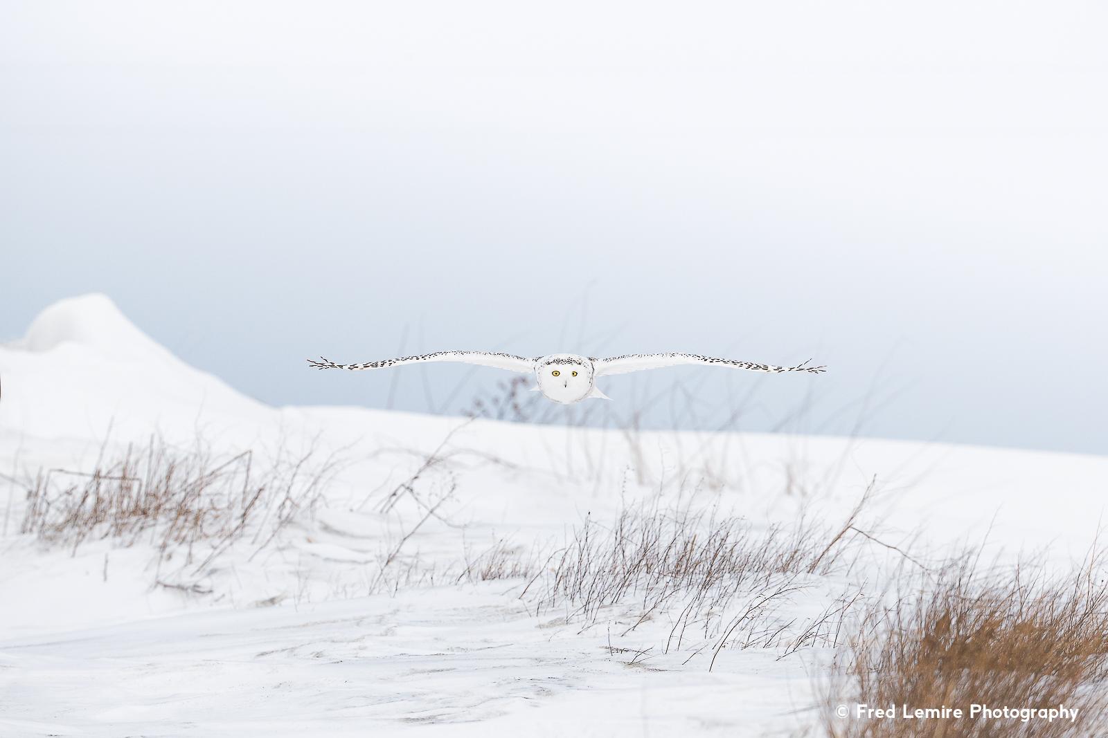Owls 22
