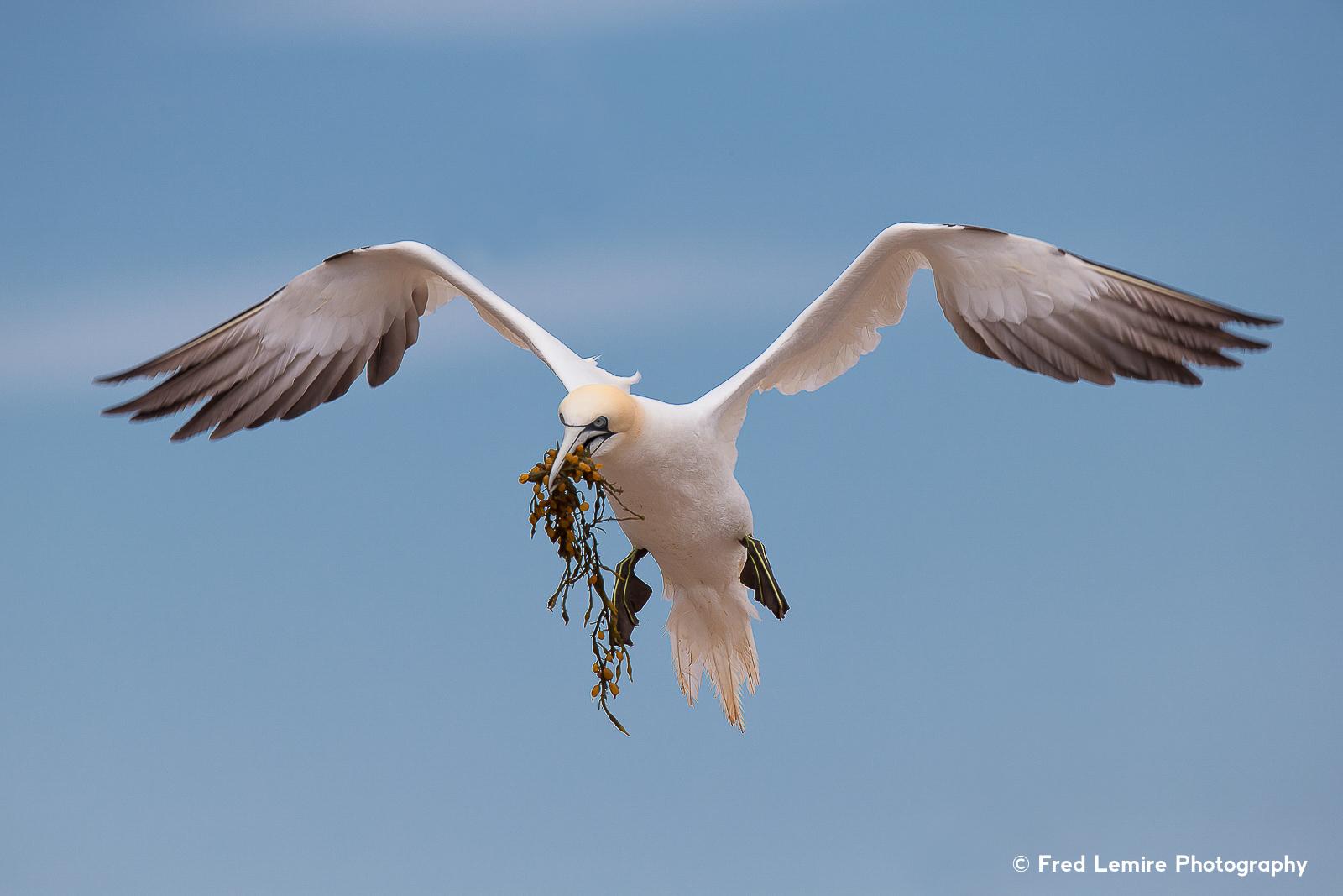 Fred Lemire Photography-sea birds-105.jpg