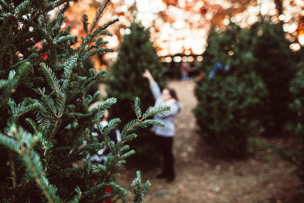 stephaniebryan_christmastree-3.jpg