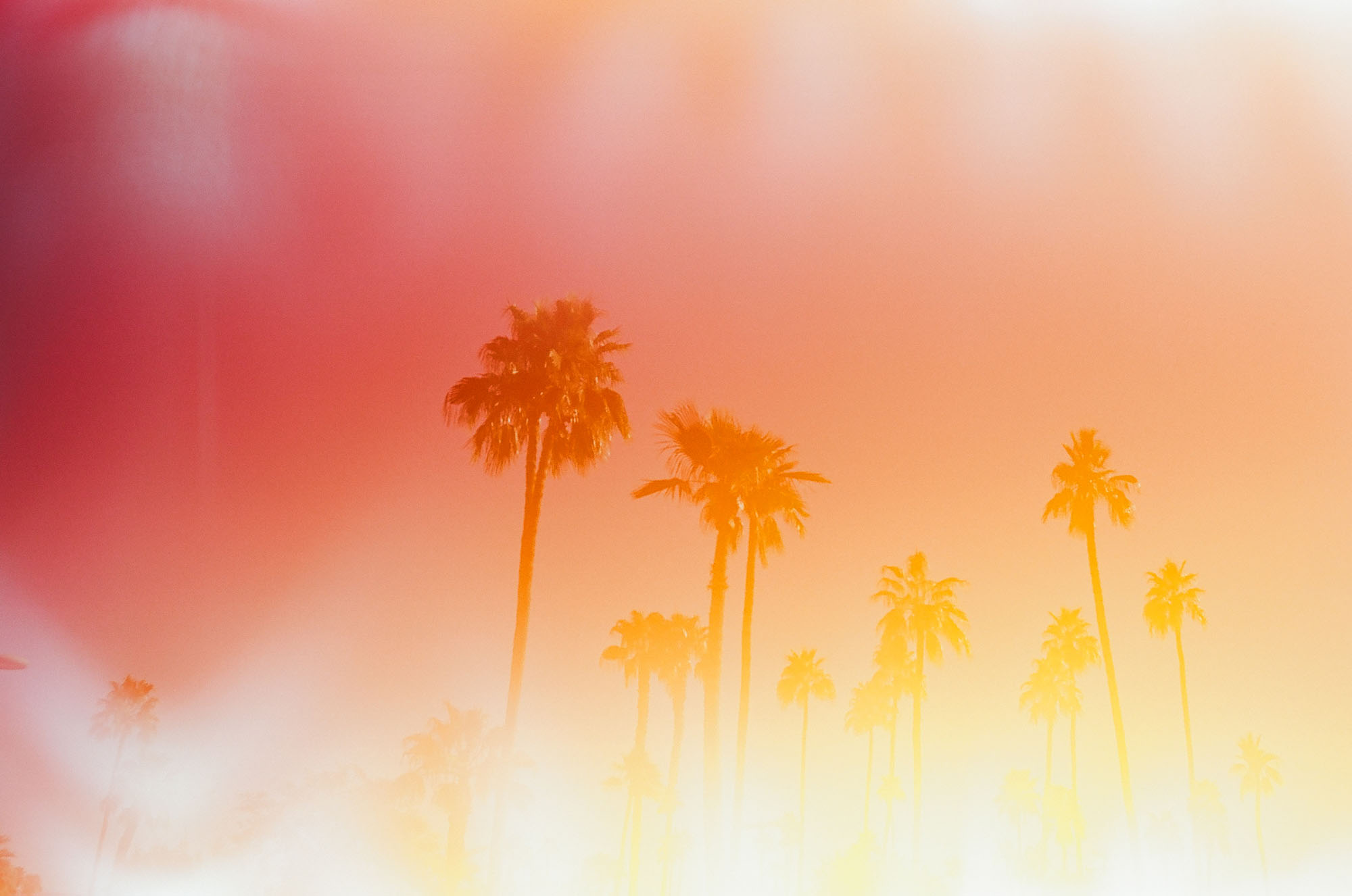 palm-trees-light-leak-palm-springs-california-film-photography-travel-photographer