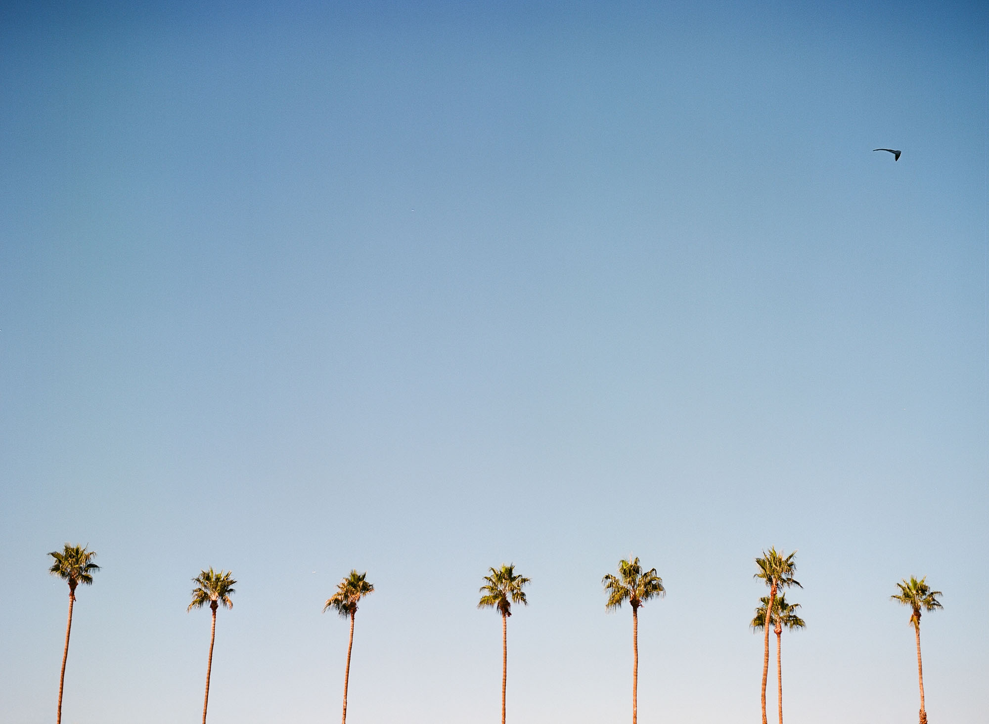 palm-trees-palm-springs-california-film-photography
