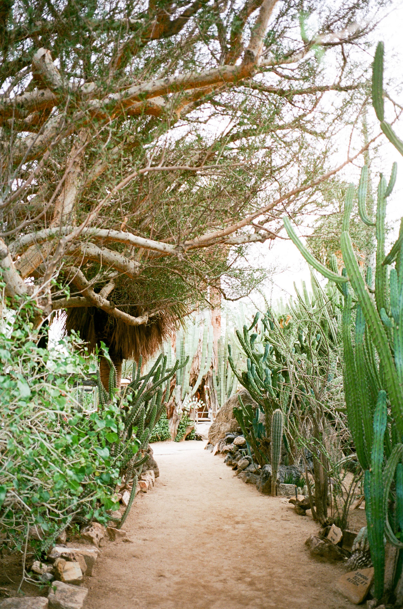 cactus-palm-springs-california-film-photography-travel-photographer