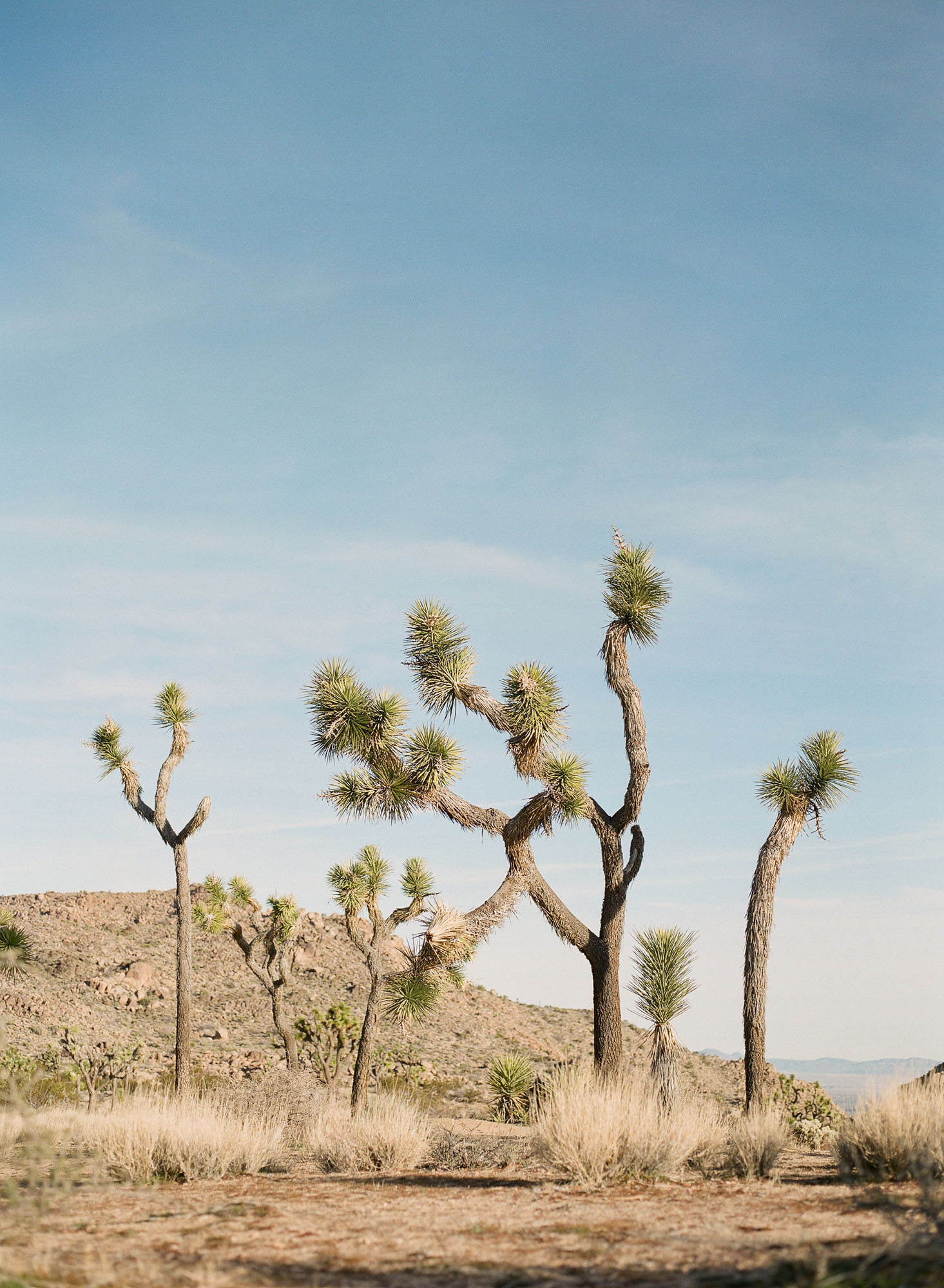 joshua-tree-palm-springs-california-film-photography-travel-photographer-003