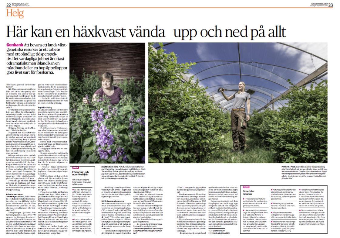 Reportage från Naturresursinstitutets växtgenbank i Pikis. Publicerat i  HBL  4 september 2016. Foto:  Karl Vilhjálmsson .