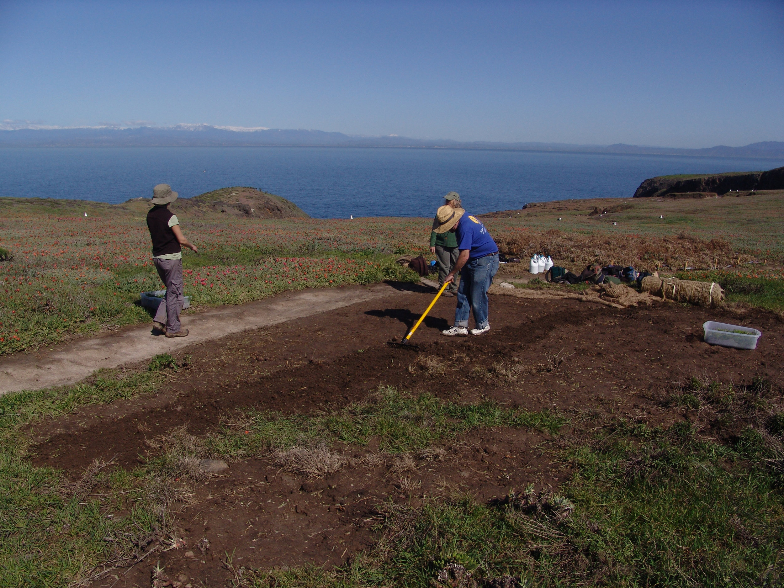 Volunteers Clear Invasive Plants on East Anacapa Island - Following this, CIR installed erosion control netting and planted natives into small holes  cut into the net.