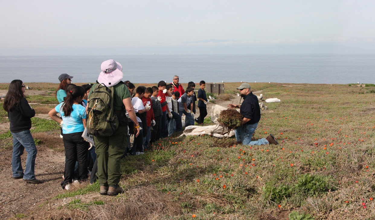 Education through Experience - Field Project Manager Kevin Thompson instructs a middle school class on how to properly remove invasive ice plant.