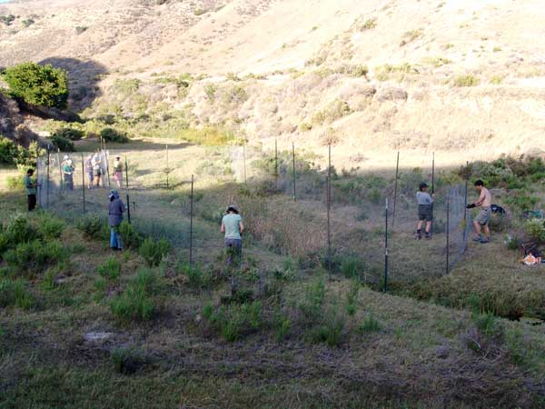 CIR volunteers install fencing around wetland habitat near the top of Lobo Canyon.