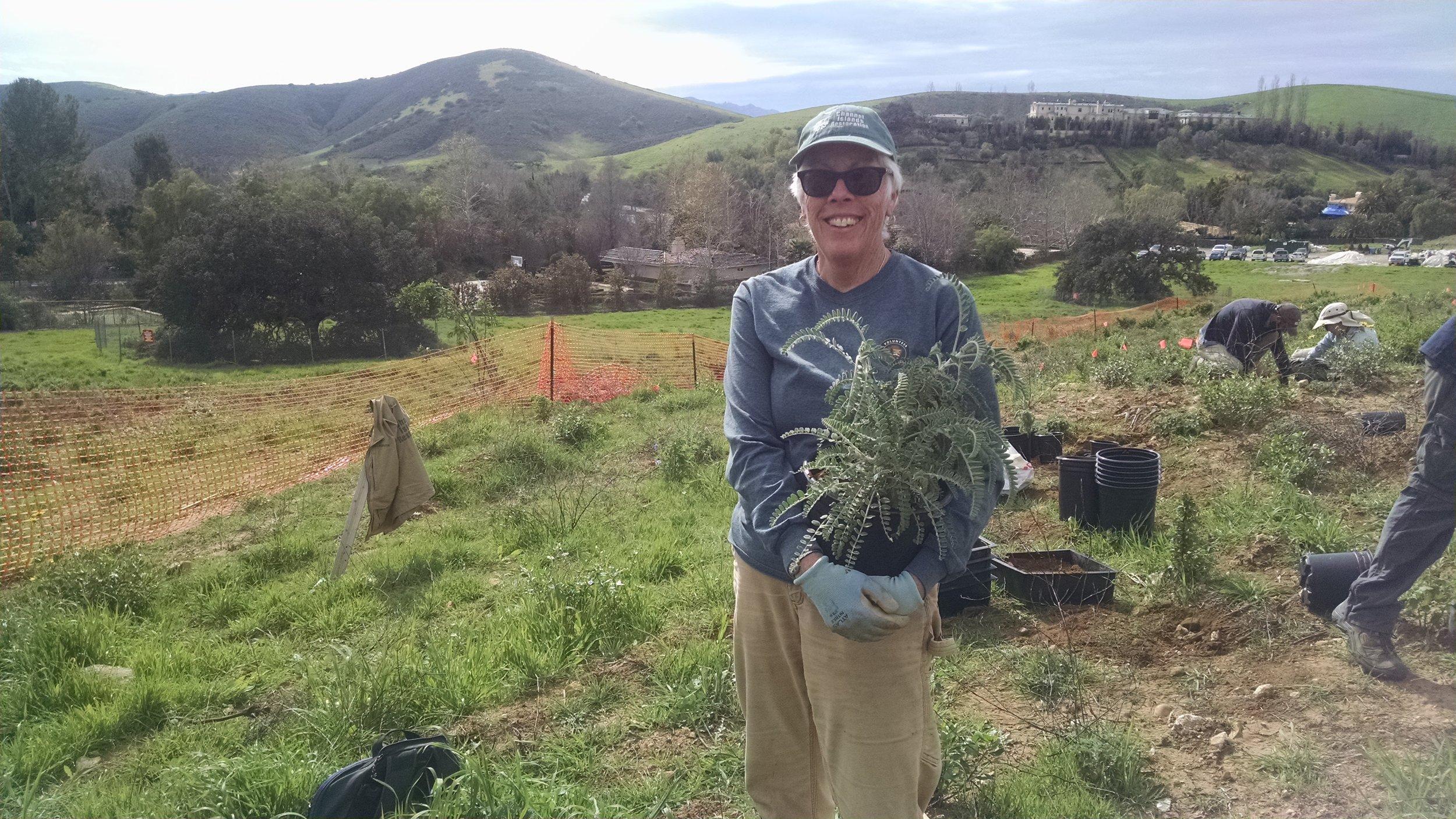 Nursery Manager Kelle Green holds milkvetch grown in her Camarillo nursery.