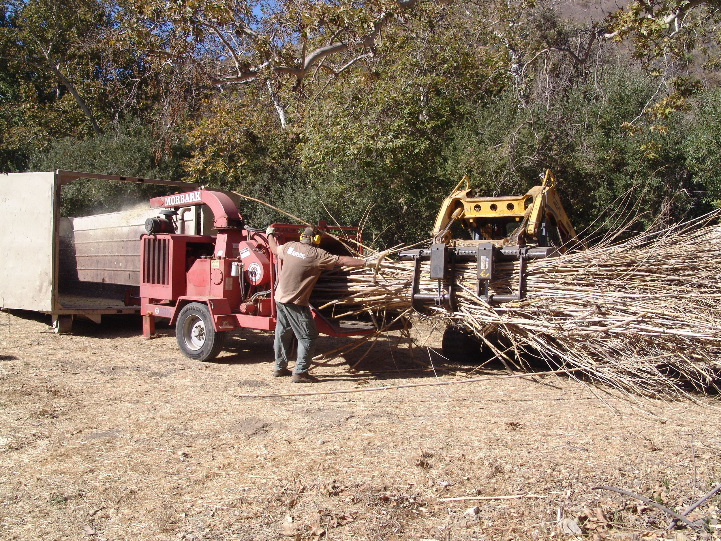 Arundo  eradication at Refugio Creek