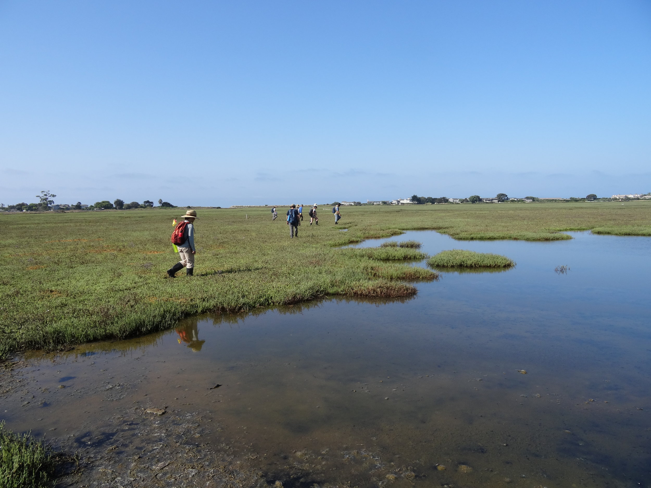 CIR staff and UCSB Coastal Fund-sponsored interns spread out into a line and walked the entire length of the marsh.