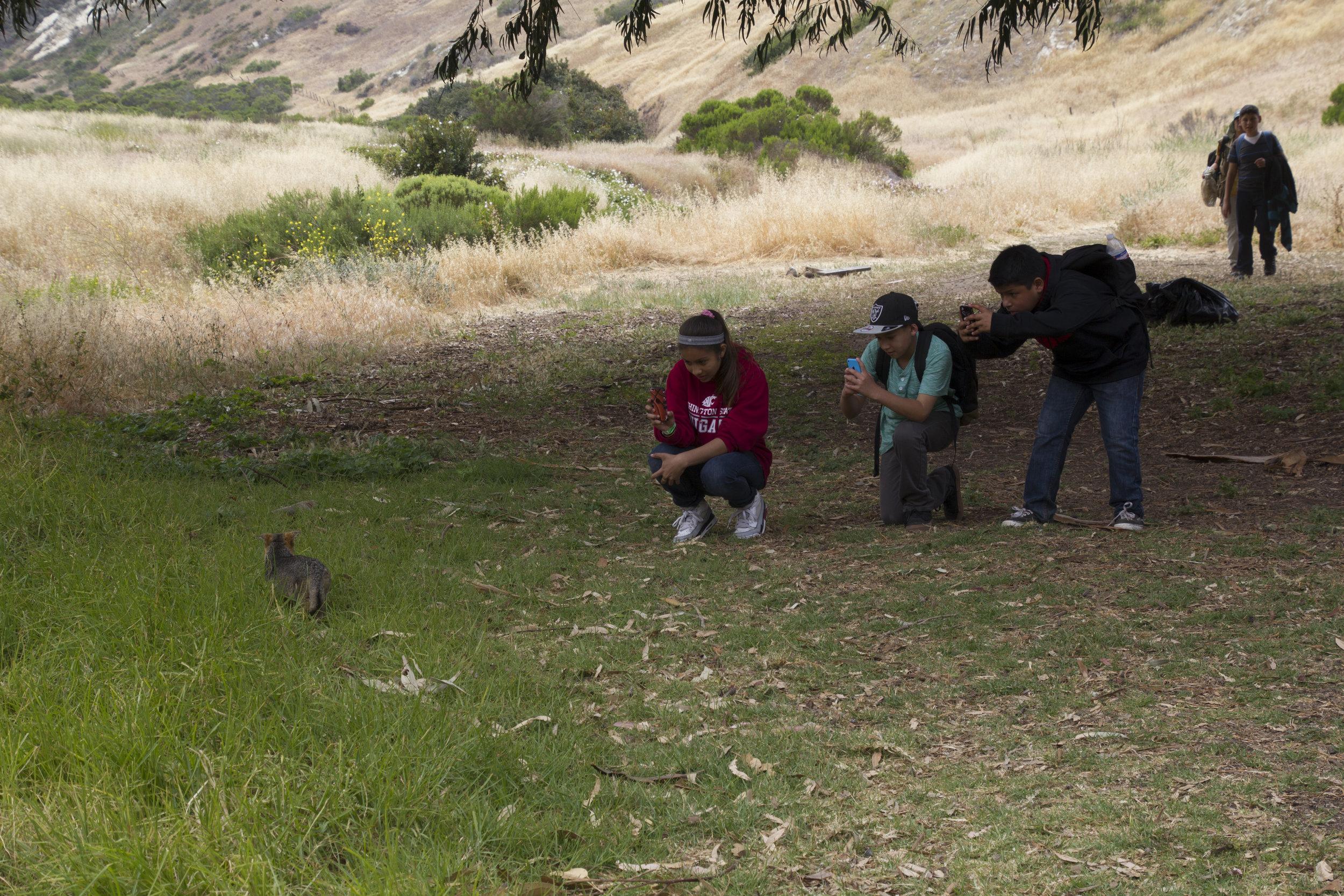 School kids see their first Island Fox