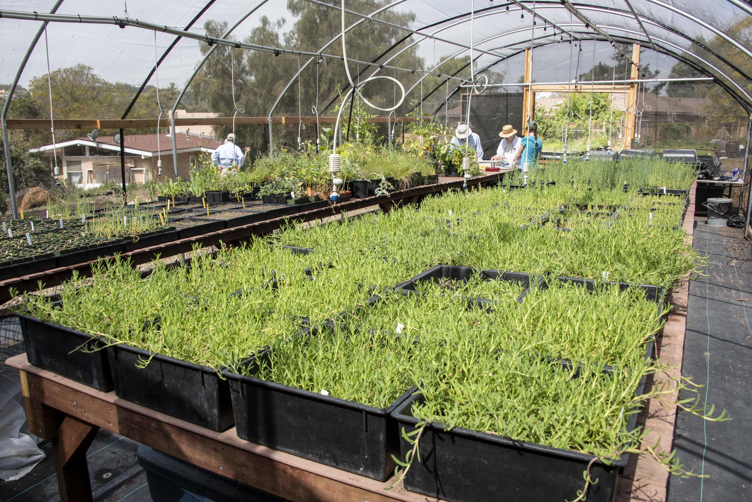 Camarillo Native Plant Nursery