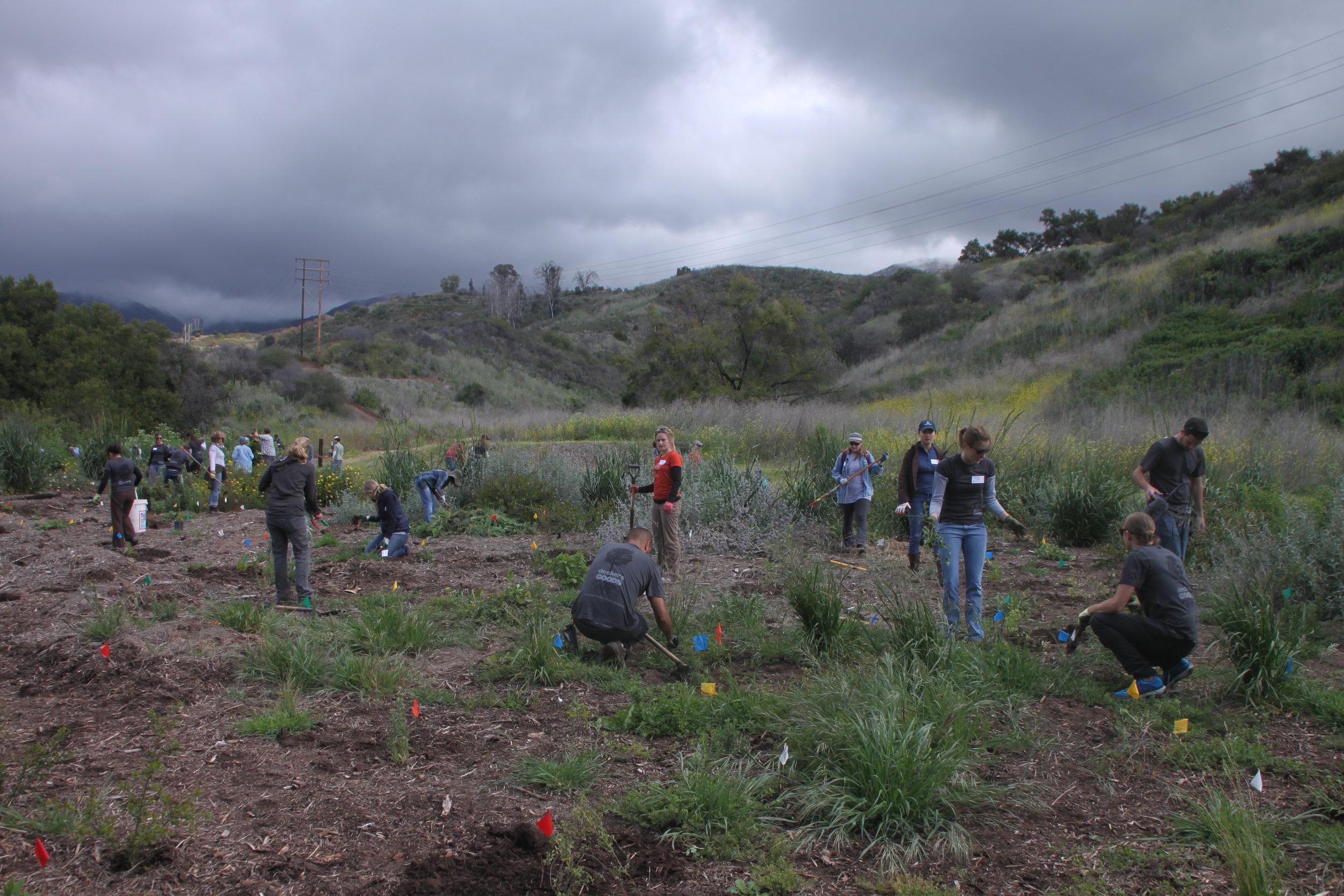 San Marcos Foothills Plantings