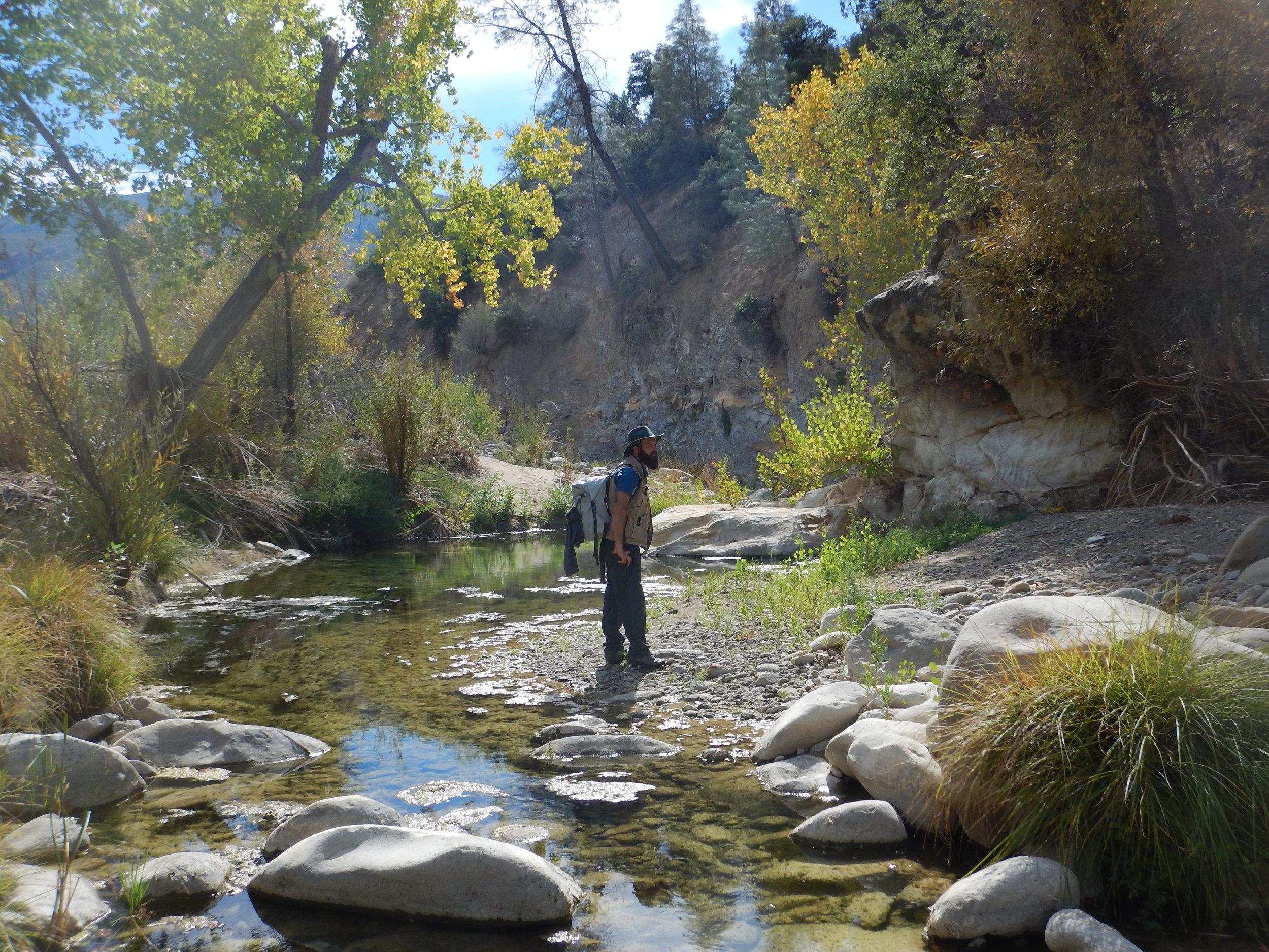 Sisquoc River Tamarisk Surveys