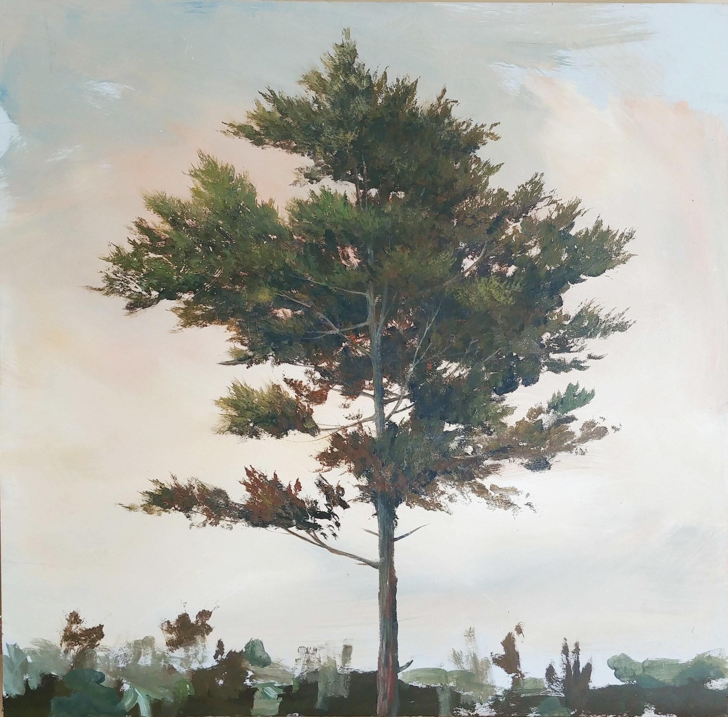 Pine 3, 2018