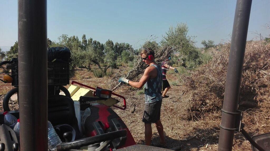 Israel - Alex Working .jpg