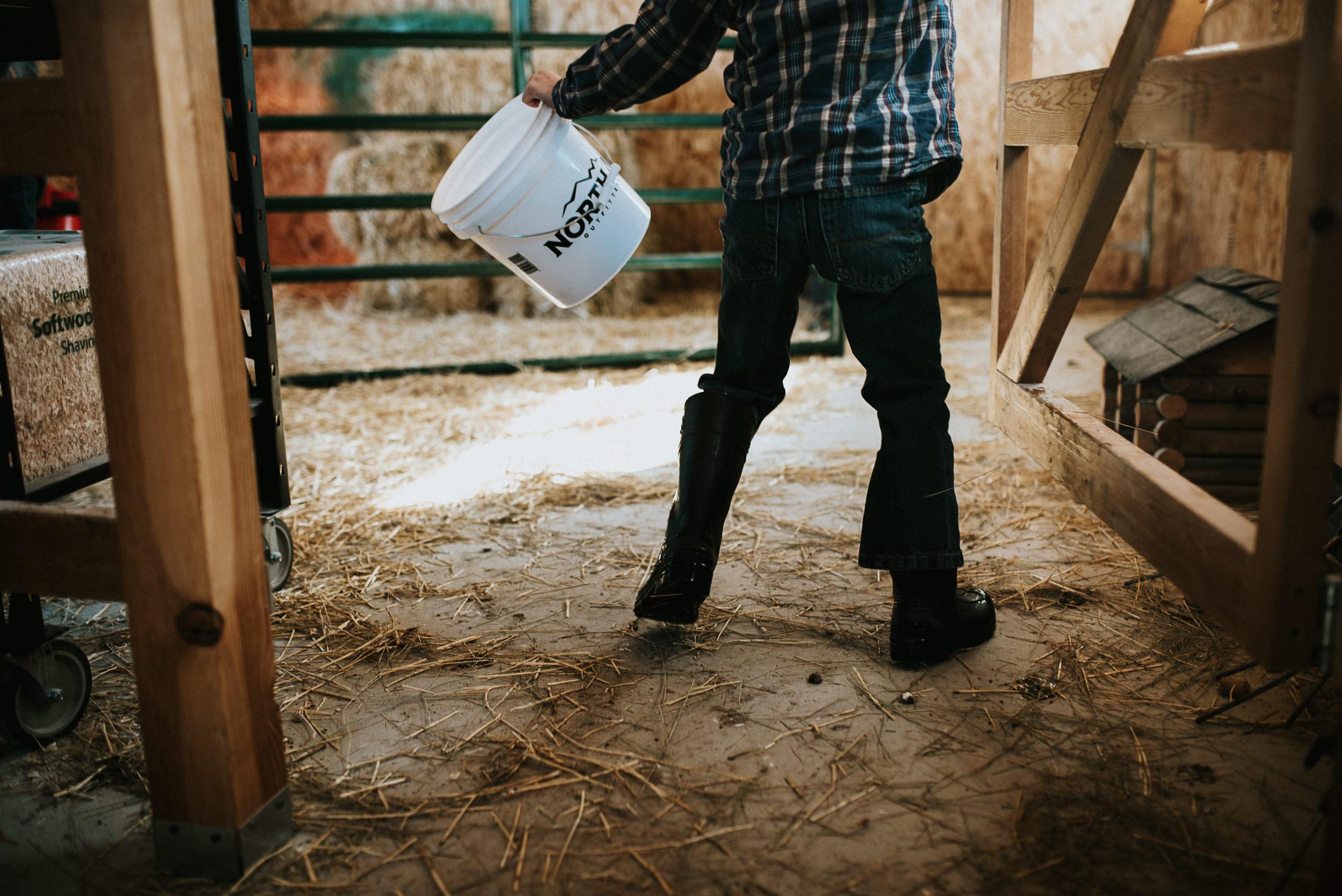 Little helpers, little cows.