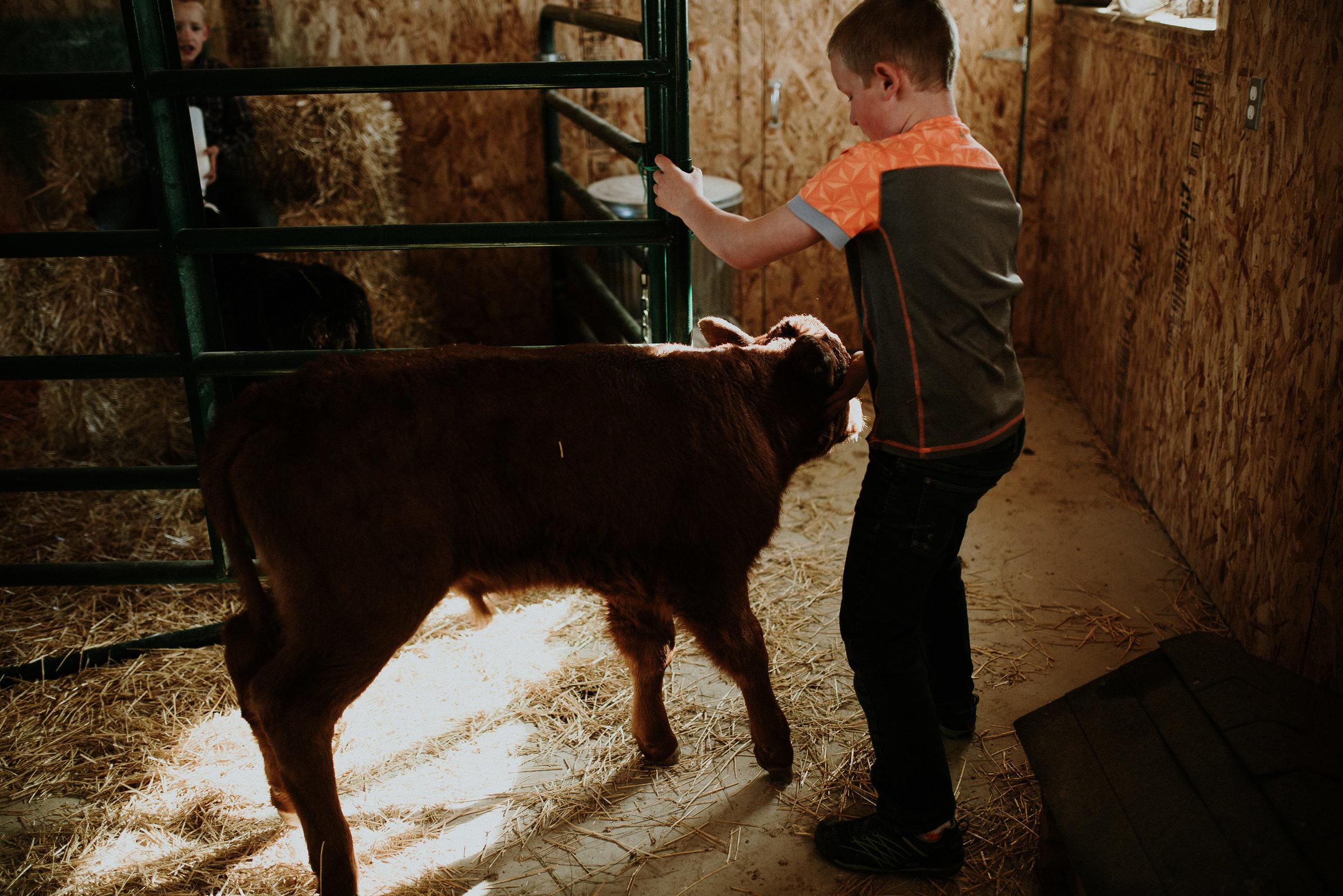 Little Helpers Little Cows