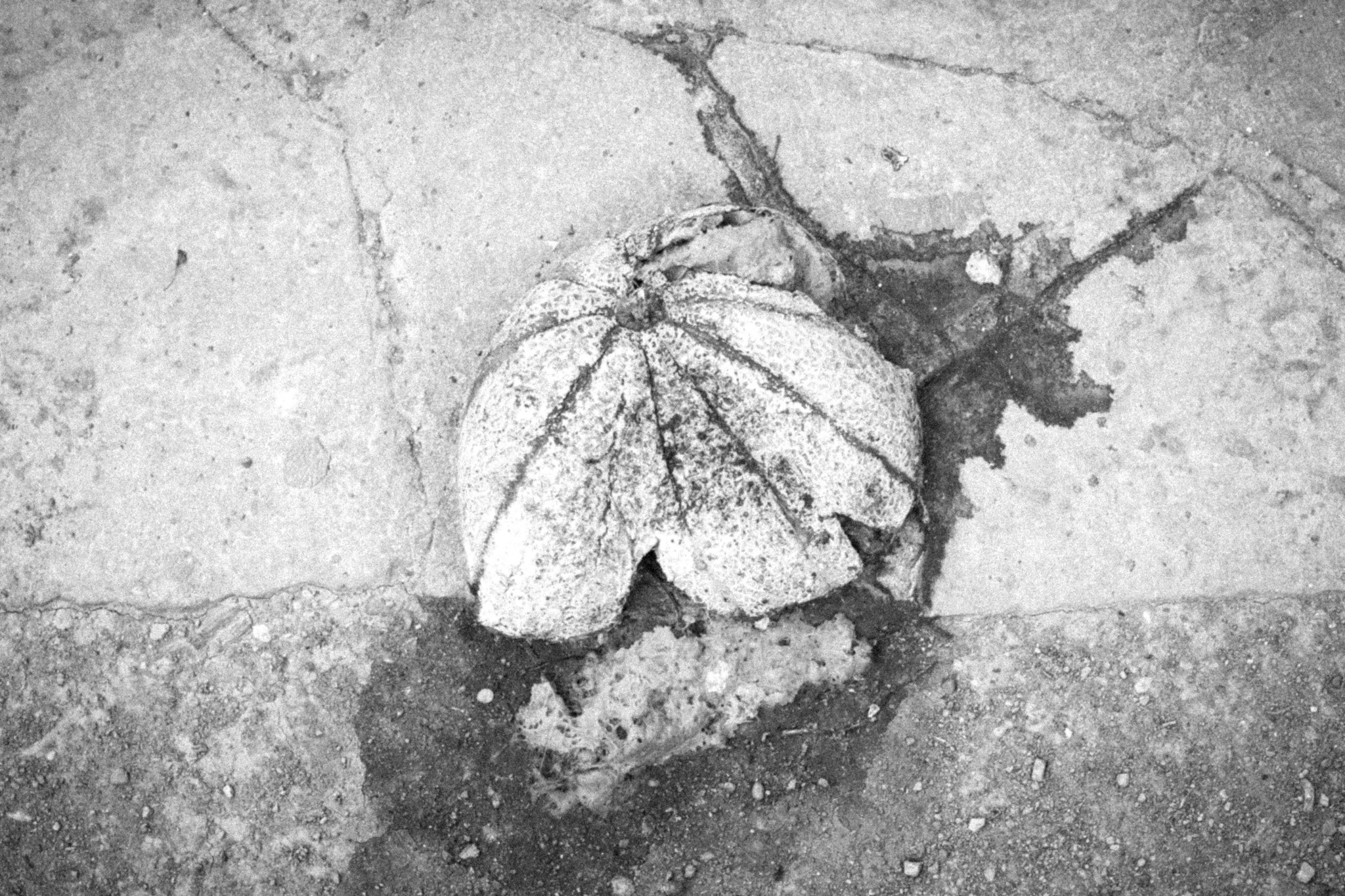 dead-budapest-rfm-2012-16.jpg