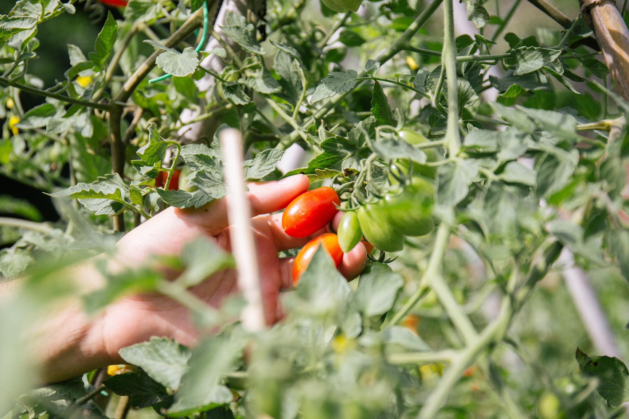 fattoria-di-collemezzano-home_web-30.jpg