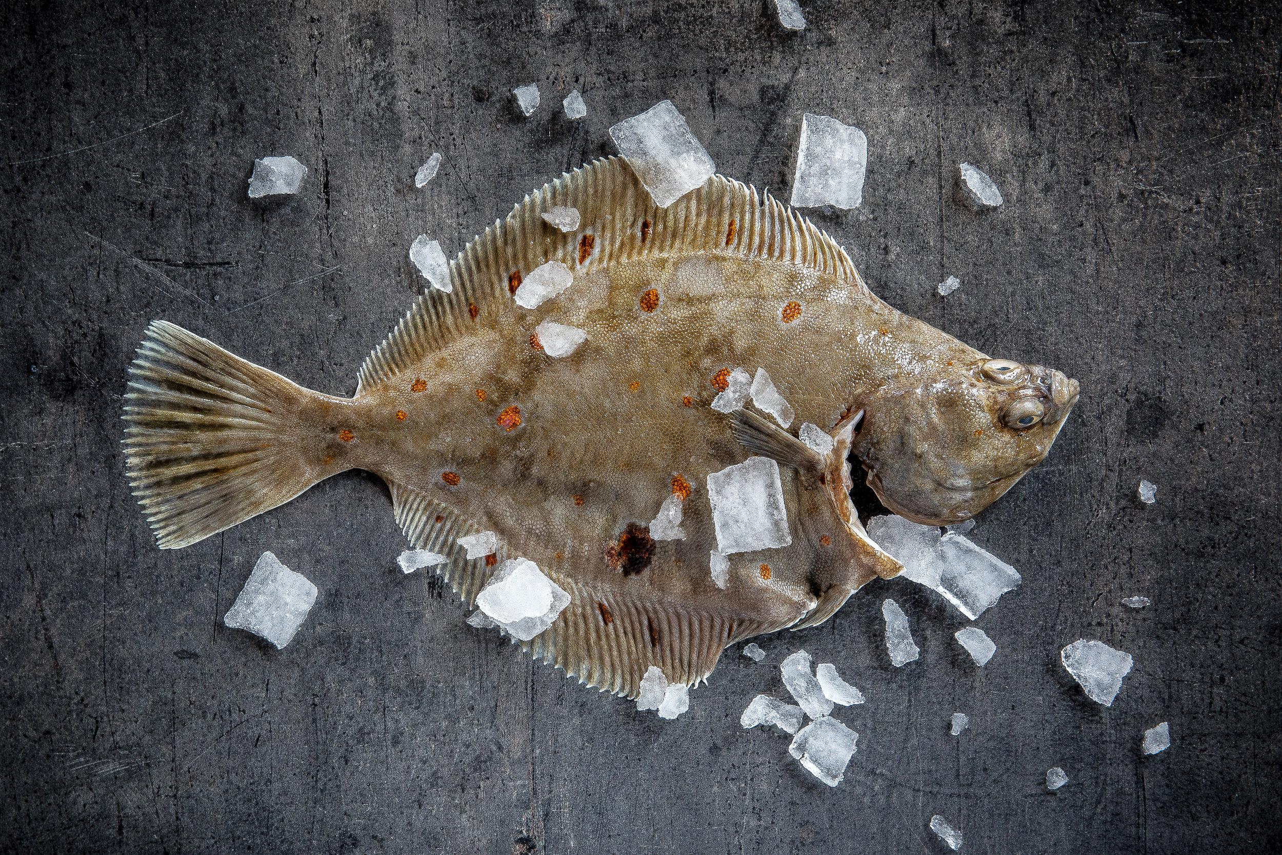 fiskeriet_080318_0021.jpg