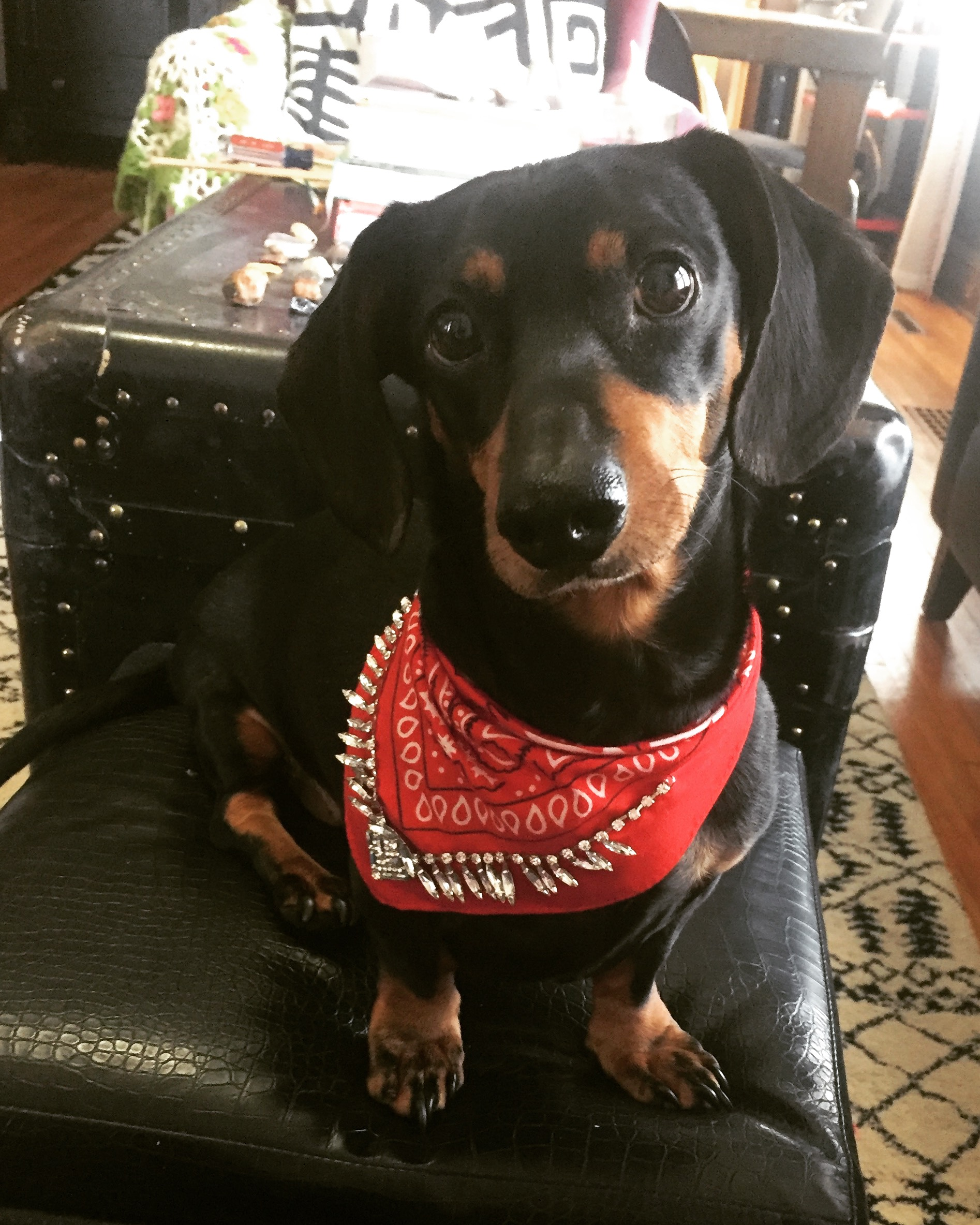If Max Wiener in his rhinestone bandana isn't the picture of success, I don't know what is. :)