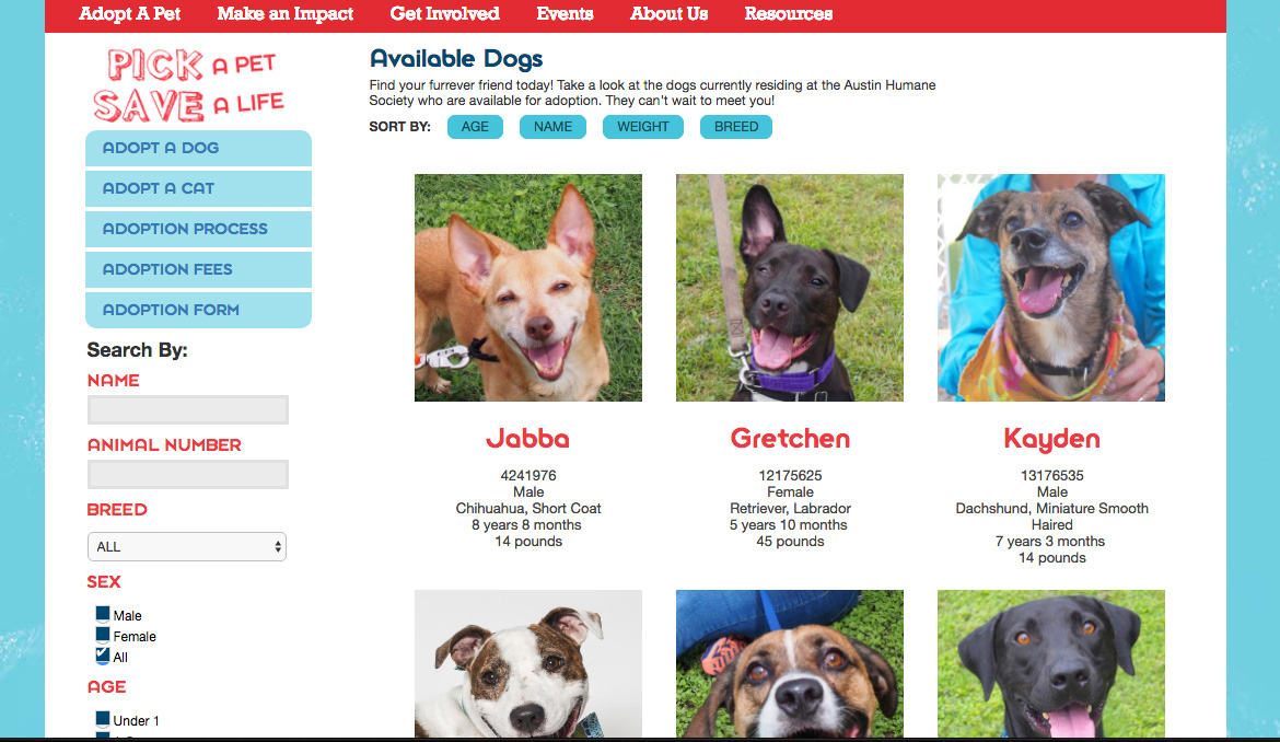 Austin Humane Society available dogs