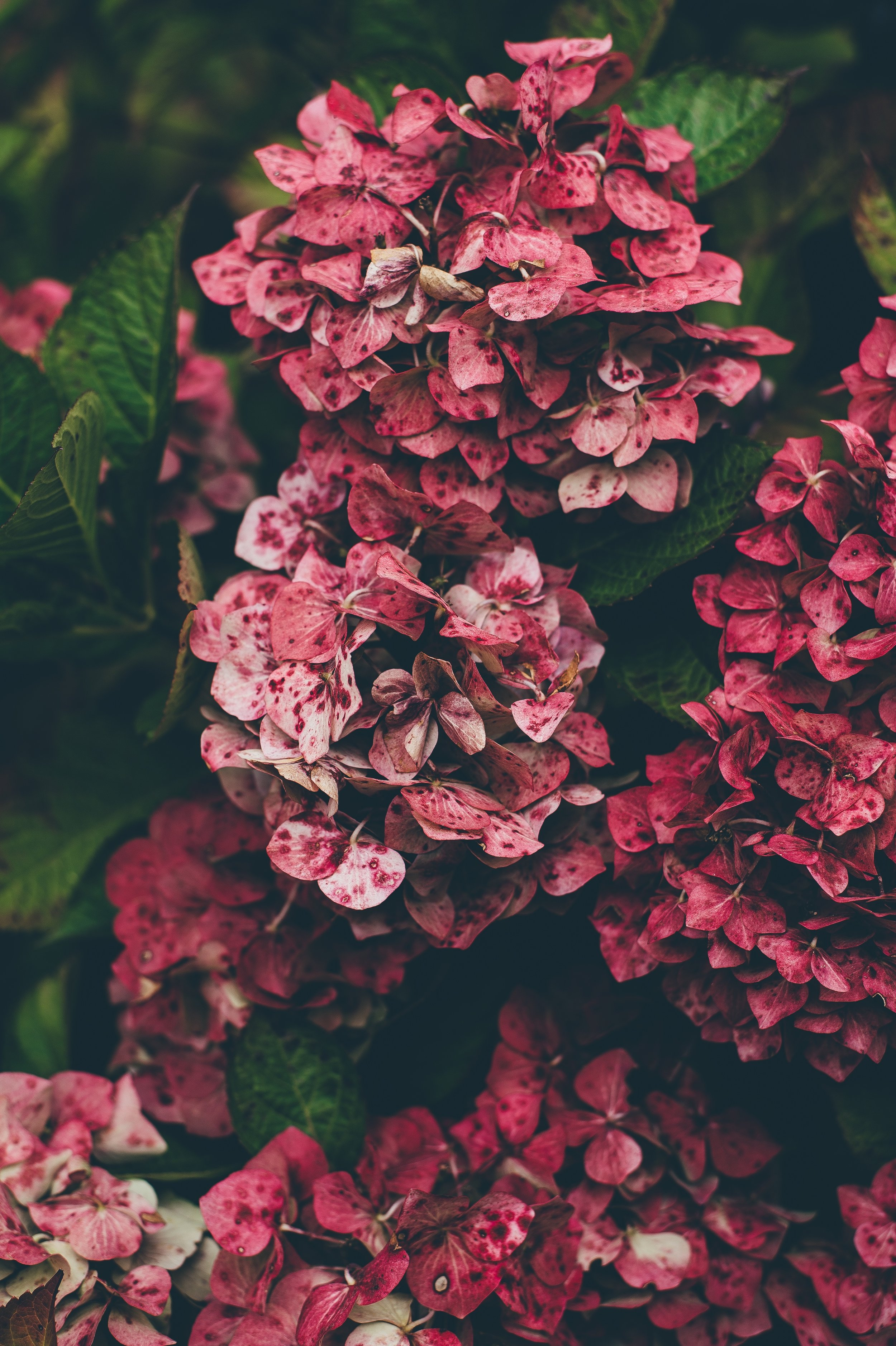 Pink Yarrow Trend Color Y&I Events Spring 2017.jpg