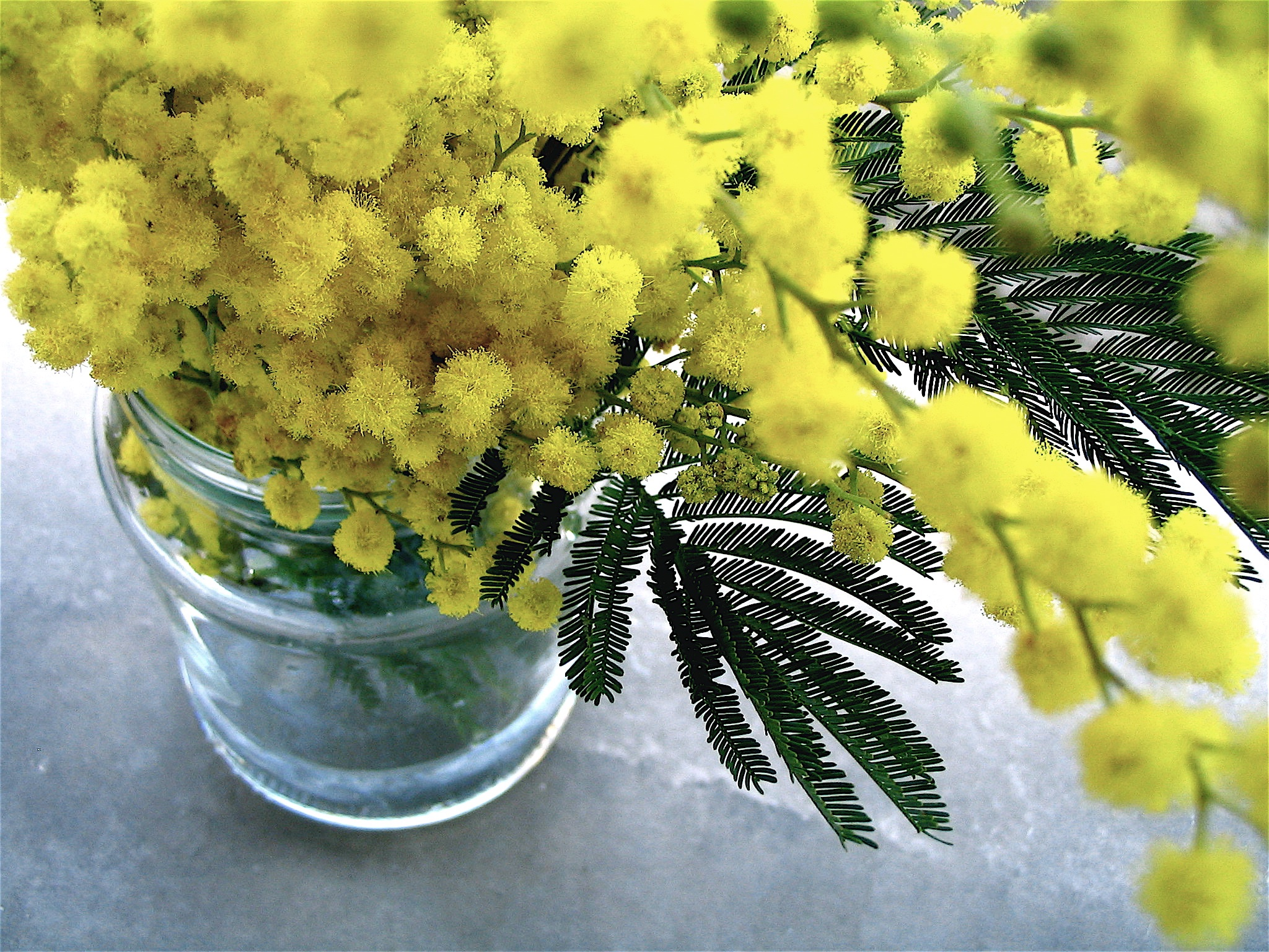 Primrose Yellow 2 Trend Color Y&I Events Spring 2017.jpg