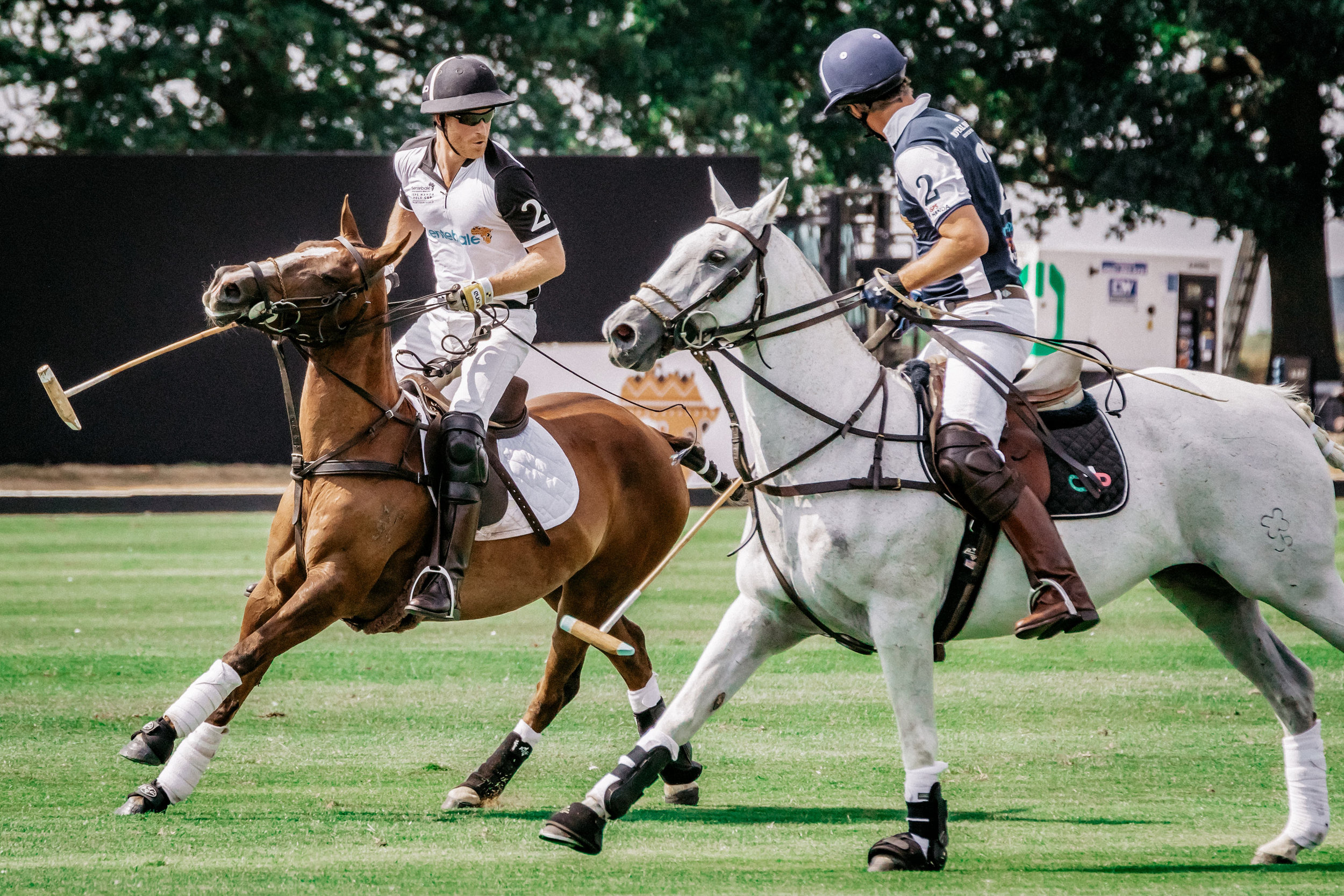 Harry in Action on the Polo Field