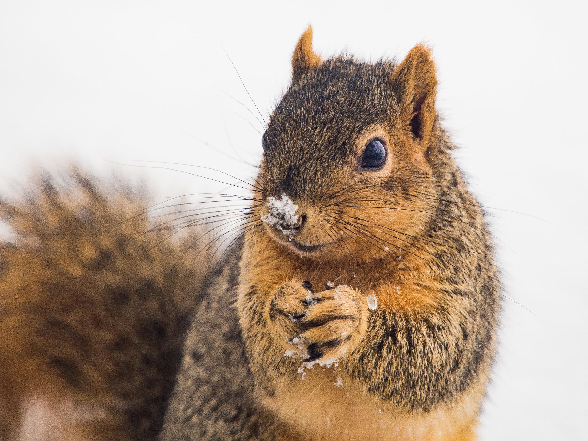 squirrel (1 of 1).jpg