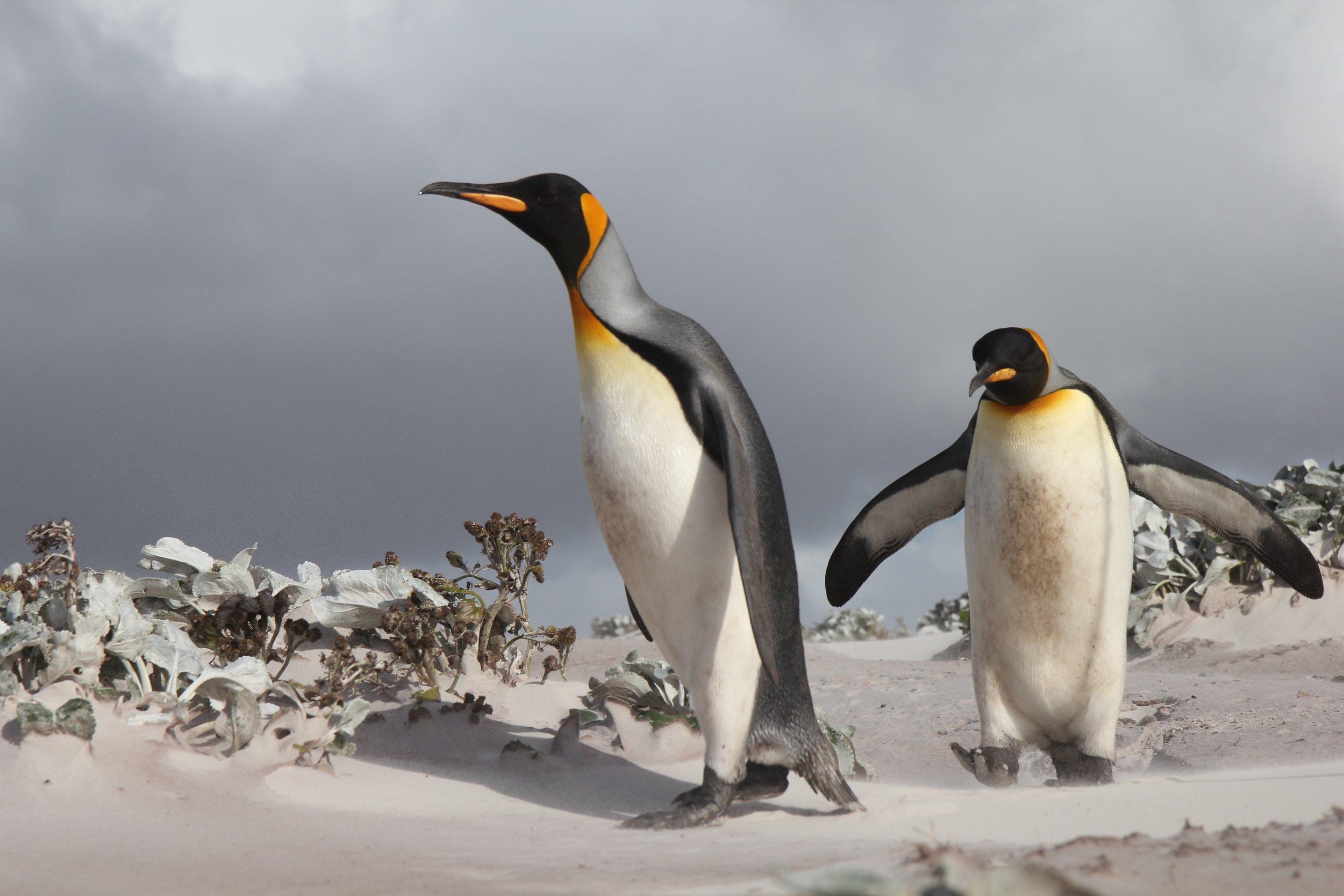 Falklands1.jpg
