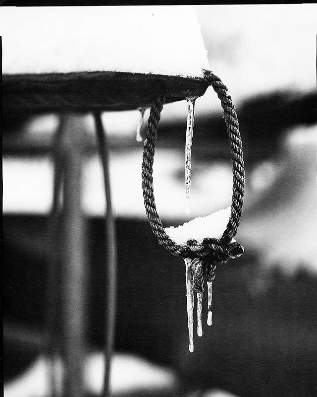Rope.  8x10  #orthochromatic #icicle #rope #largeformat #photography #blackandwhite #shootonpaper #iso2 #directpositive #intrepidcamera #8x10 #ilfordphoto #harmandirectpositive @intrepidcamera @ilfordphoto @emulsivefilm @streethoney @filmneverdie