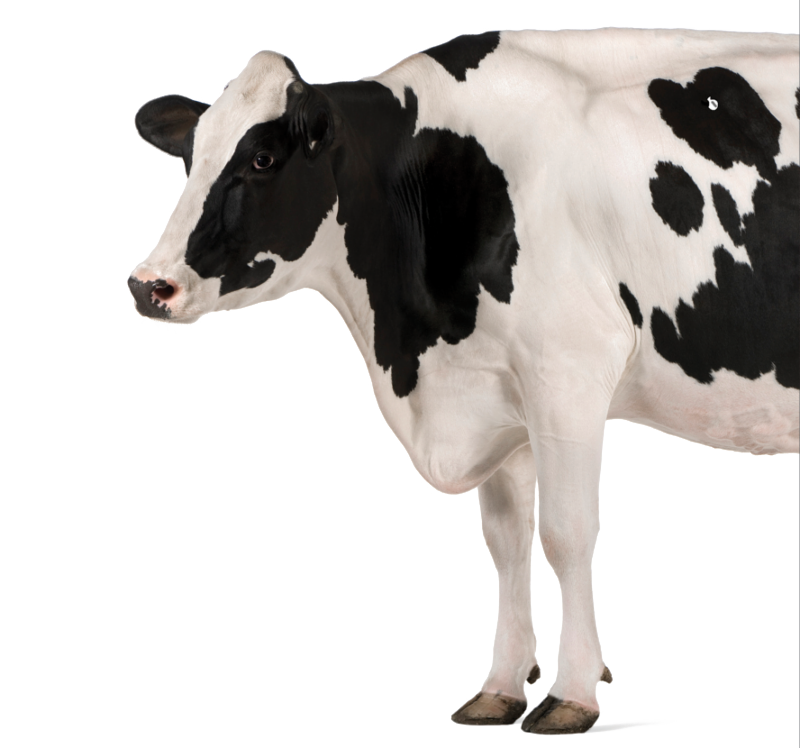 Qualigrass Cow.png