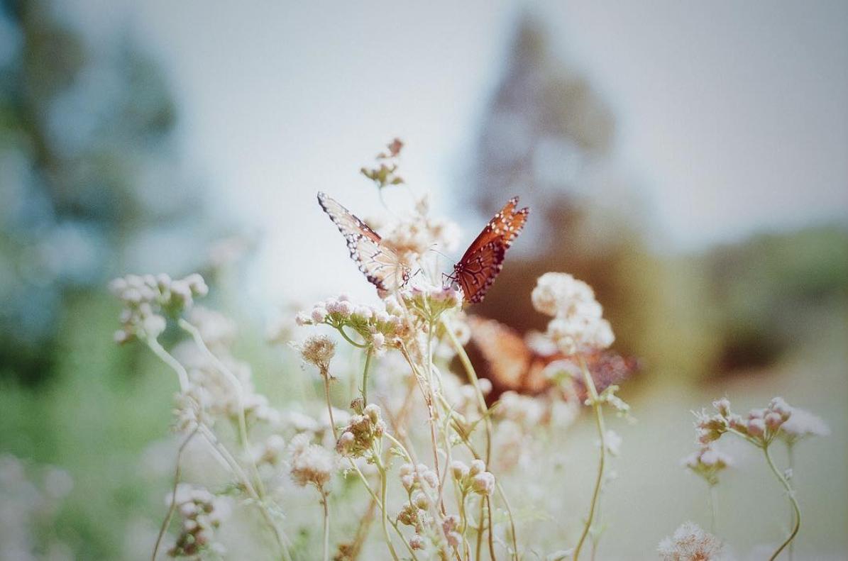 Summertime. 35mm.
