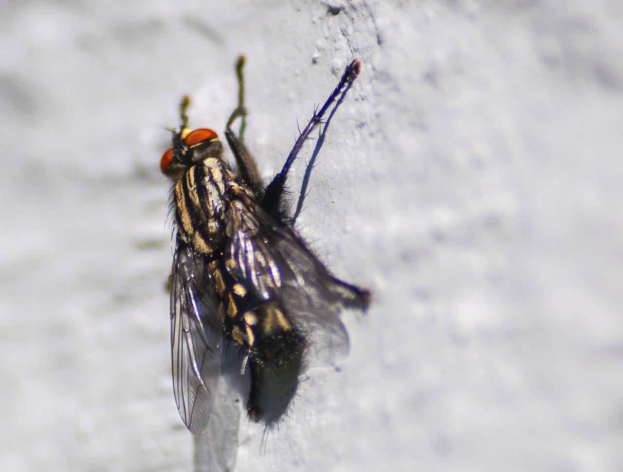 fly-1692772_1280.jpg