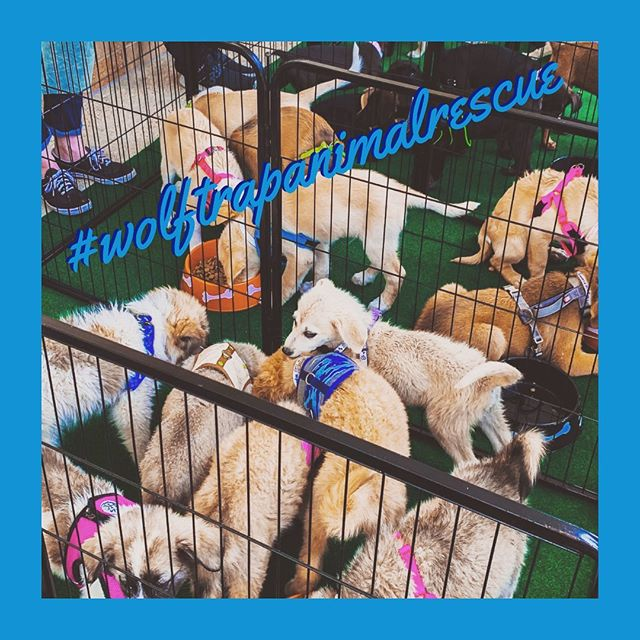 In the market for a new friend? A whole batch of foster 🐕 should be ready in a few weeks to find their forever homes!