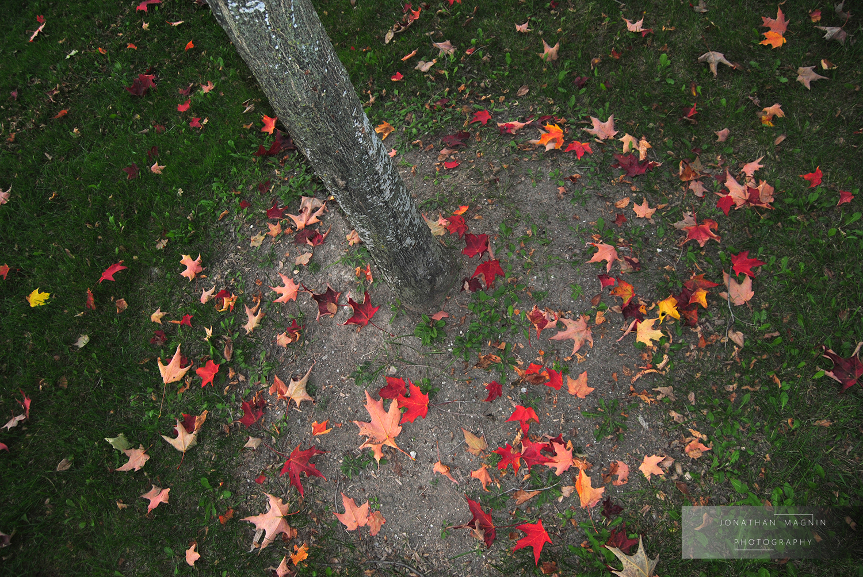 Toronto Leaves © Jonathan Magnin