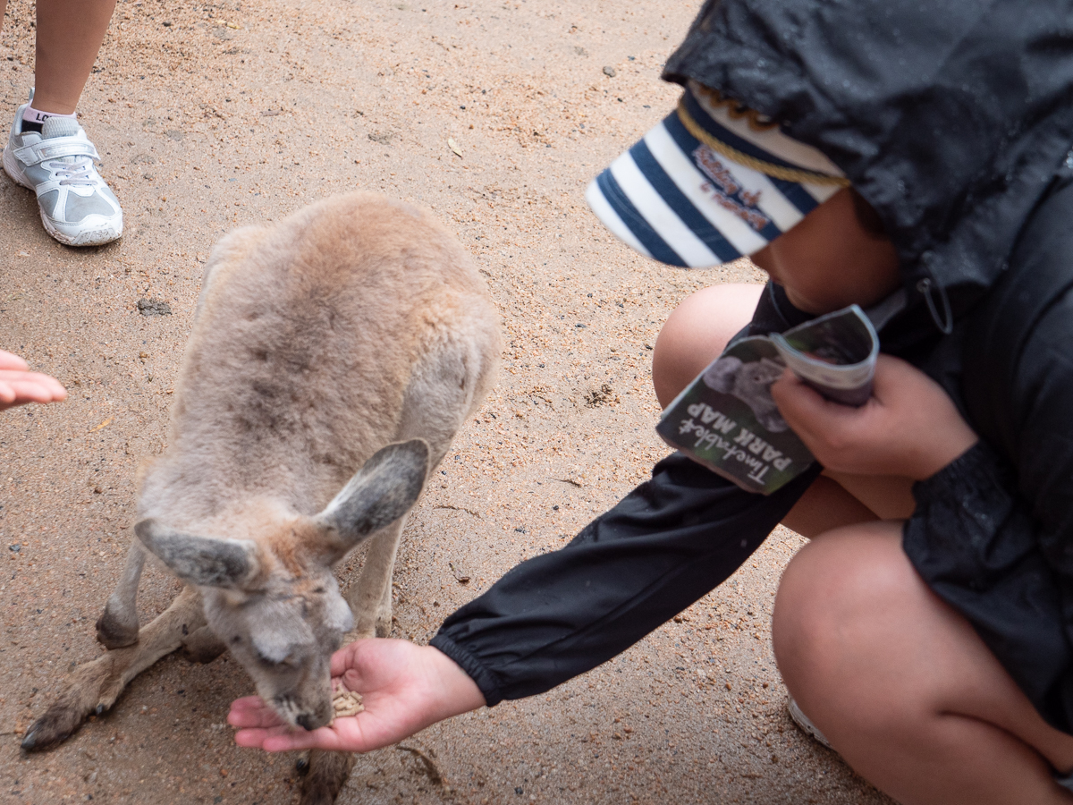 Acorn-Eikaiwa-Australia-Picks032019-10.jpg