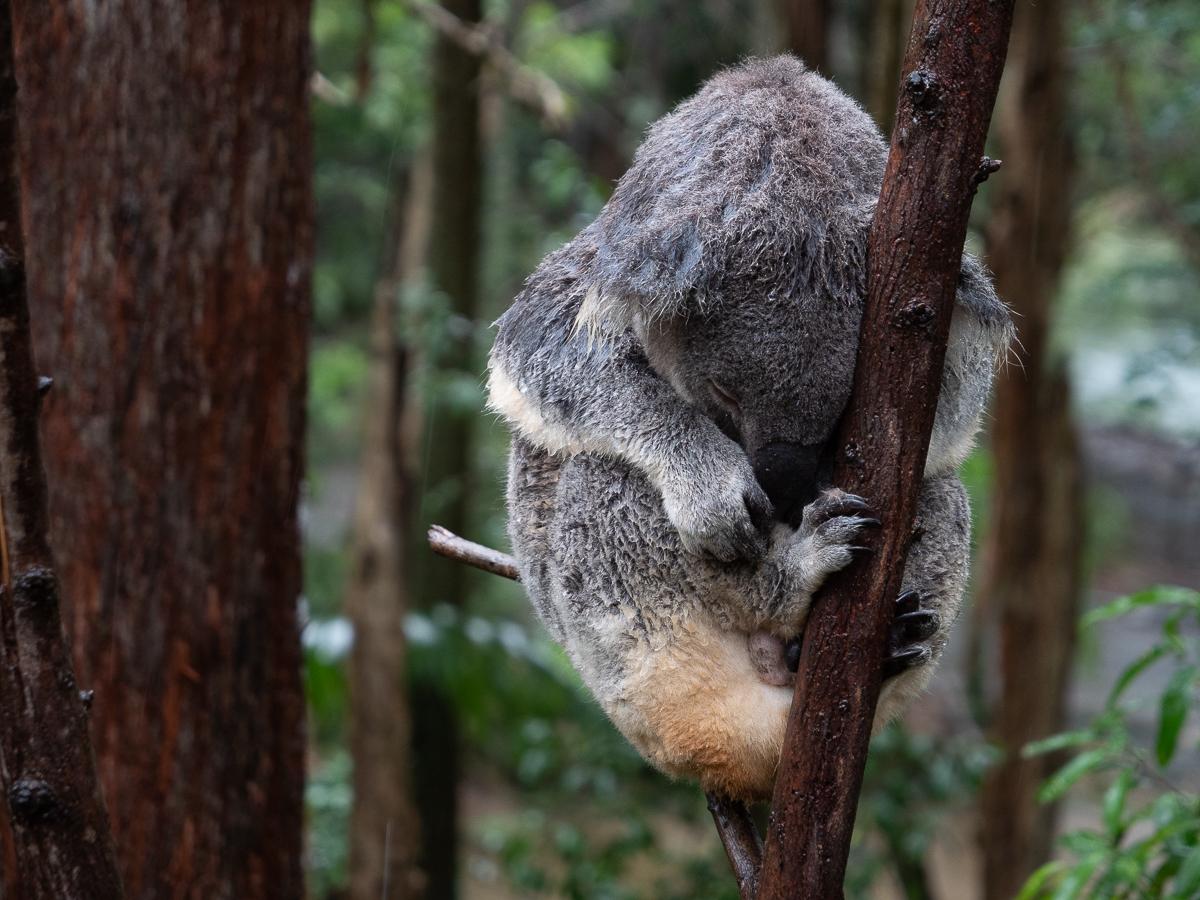 Acorn-Eikaiwa-Australia-Picks032019-12.jpg