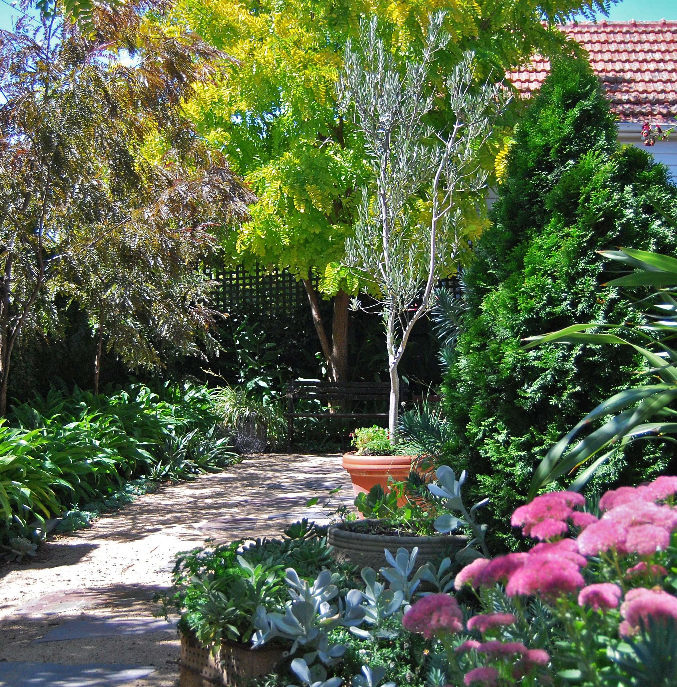 Dappled shade of the Gleditsia