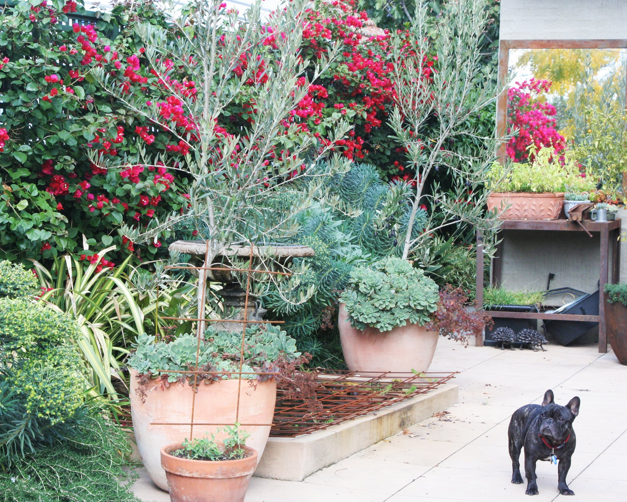 Sun filled courtyard (and Frog the Dog)