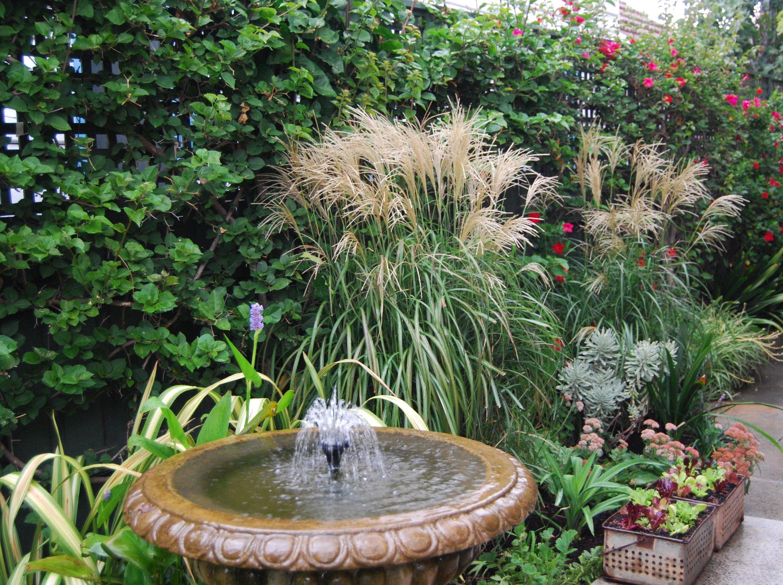 Miscanthus adding texture to the garden