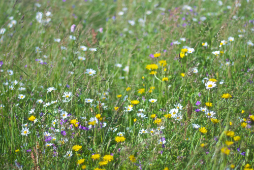 Meadows have plants that grow and flower at different times of the year, this helps the plants to co-exist in very close spacing.