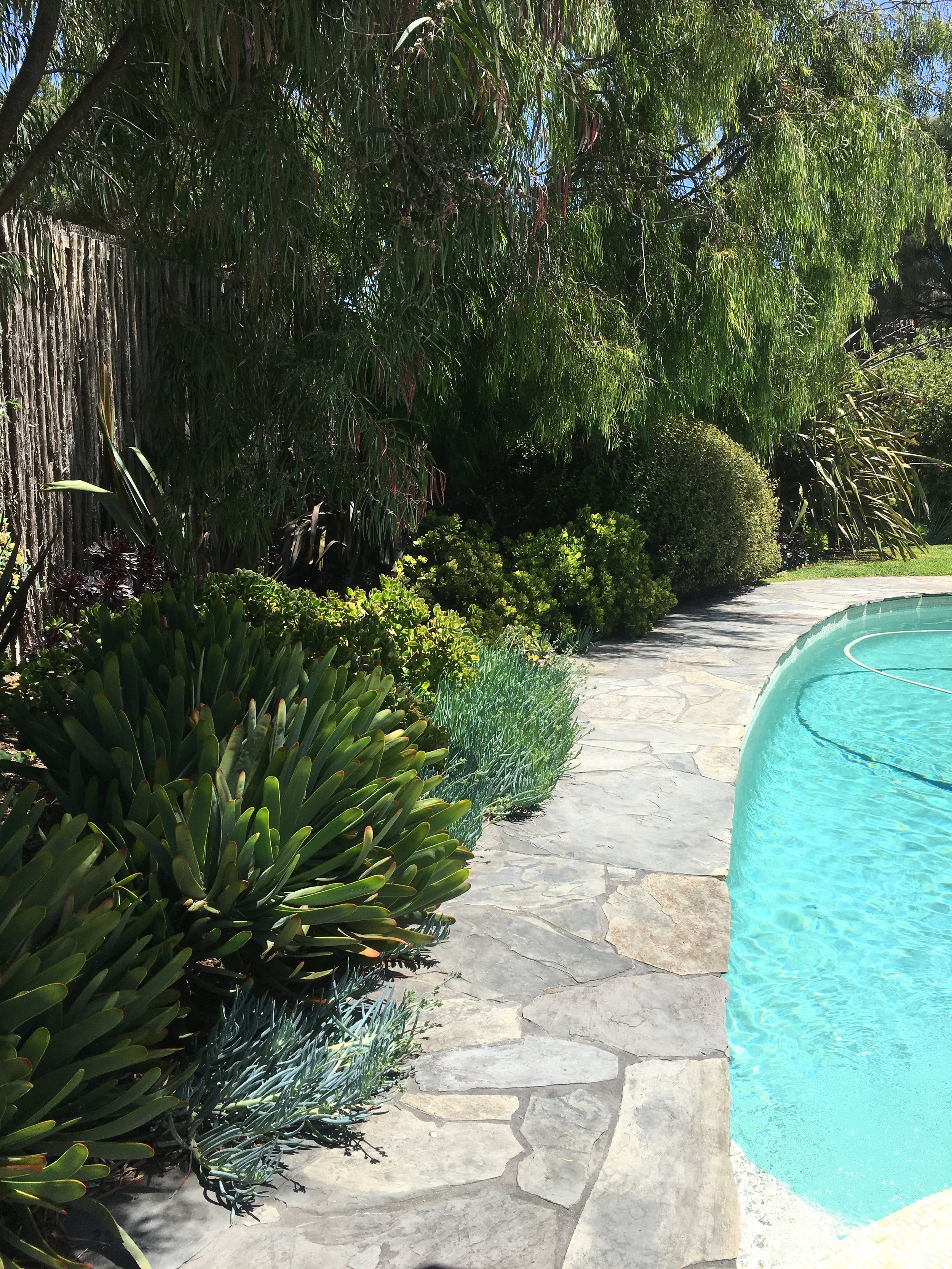 Arnott - pool side suculant planting .jpg